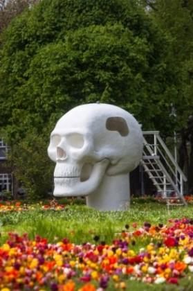 wellness skull