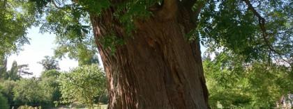 bomenridder